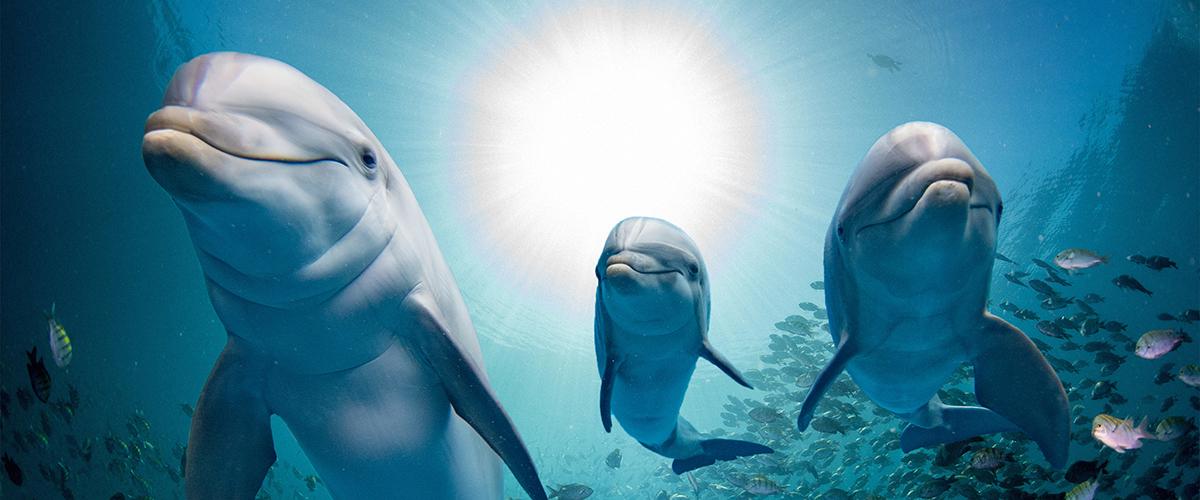 Three dolphins facing camera
